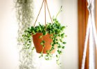 Závěsné rostliny