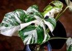 vzácné rostliny