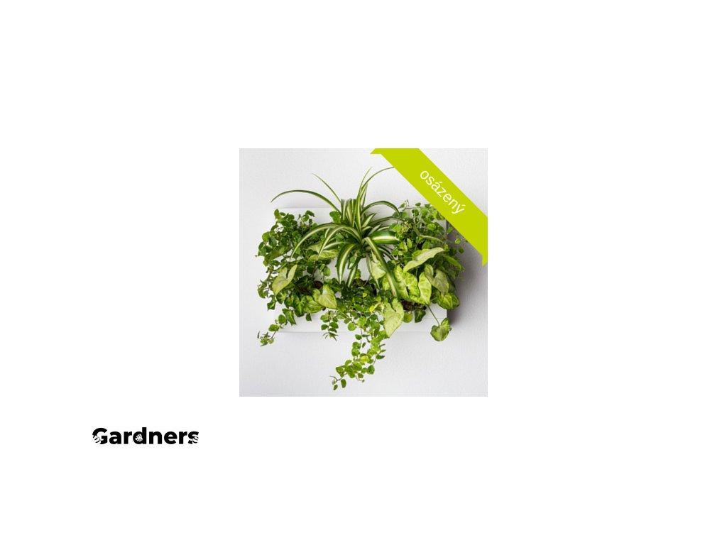 Obraz z živých rostlin HOH!UNO osázený, bílá, na světlo
