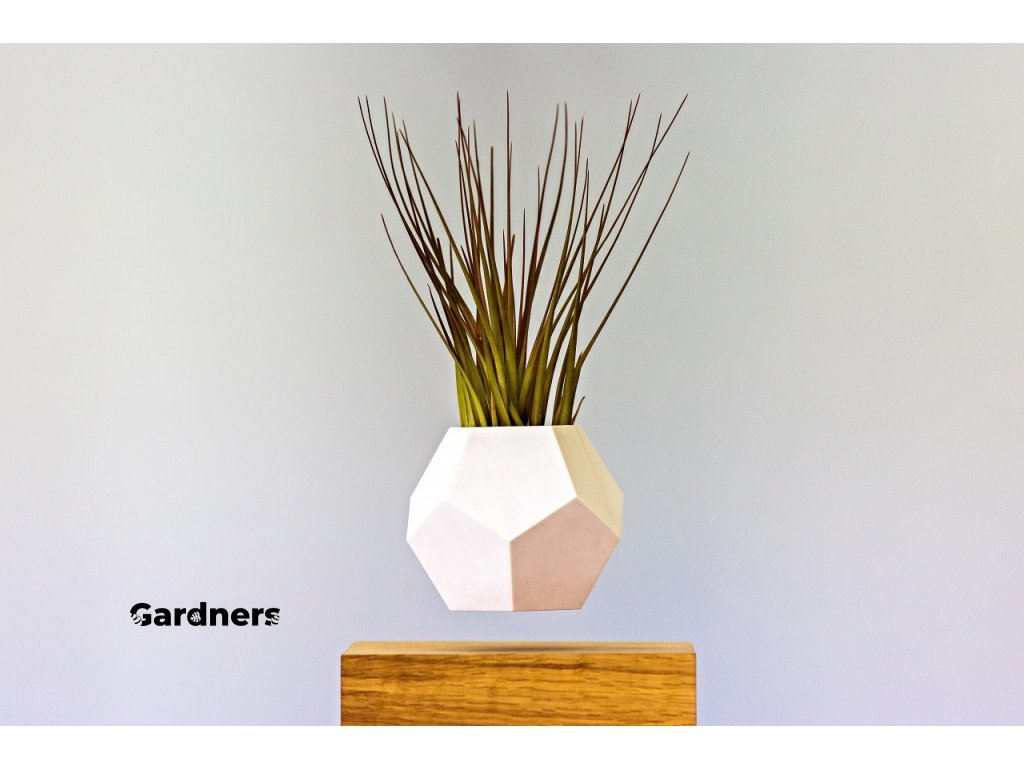 Levitující květináč Flyte Lyfe Planter Rostlina zdarma  Rostlina zdarma