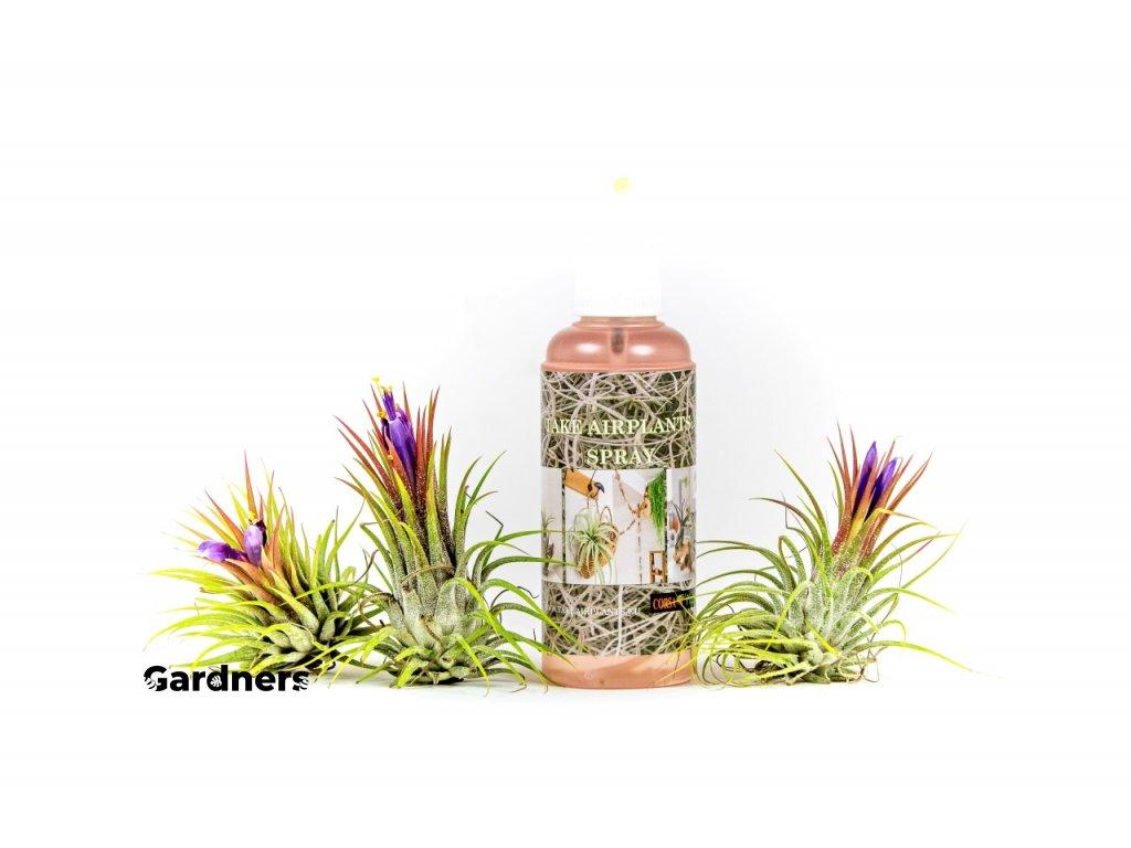Gardners.cz hnojivo na tillandsie 2