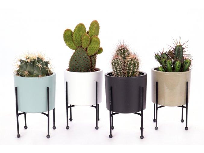 Gardners.cz Kaktusy mix v květináči, průměr 10 cm