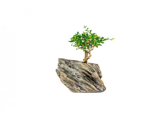 Bonsai zasazená v kameni, průměr 22 cm