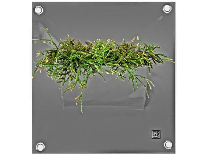 Kapsář na květiny PEVA 50x45 cm, šedá