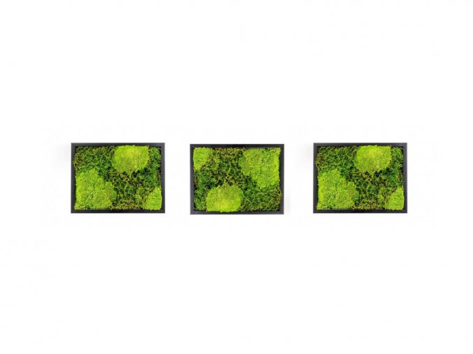 Set 3 mechových obrazů 13x18 kombinovaný mech kopečkový s plochým, černá