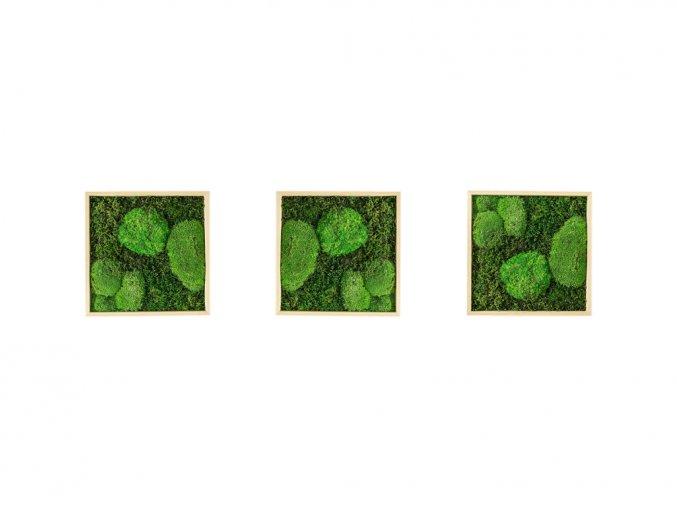 Gardners.cz Set 3 mechových obrazů 22x22 z kopečkového mechu v kombinaci s plochým, přírodní