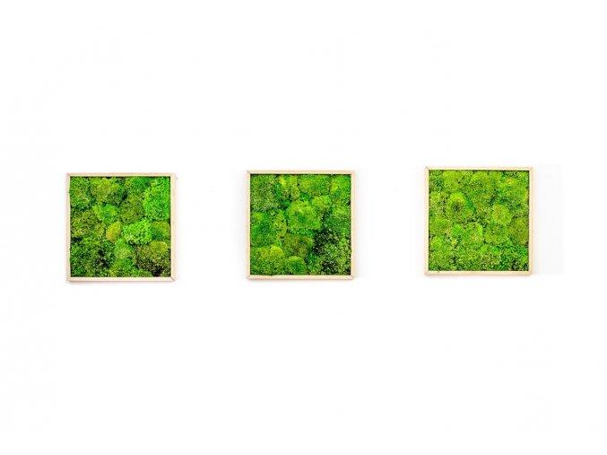 Gardners.cz Set 3 mechových obrazů 22x22 z kopečkového mechu, přírodní