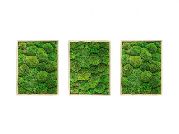 Gardners.cz Set 3 mechových obrazů 30x40 z kopečkového mechu, přírodní
