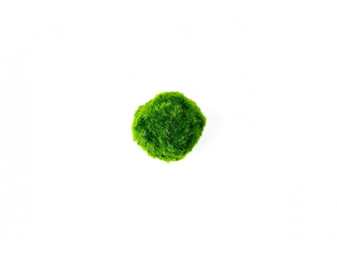 Řasokoule zelená S