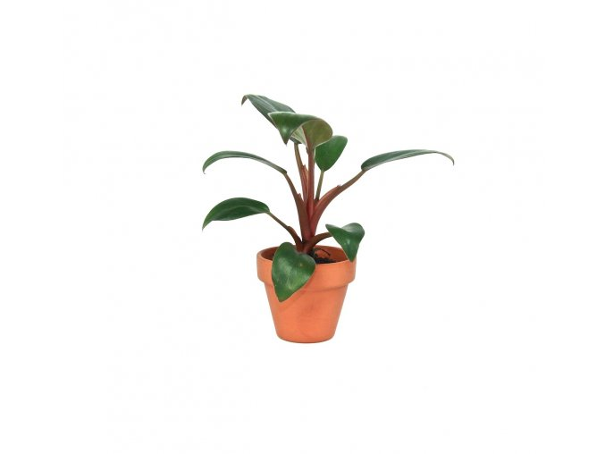 Gardners.cz Philodendron Red Baron, průměr 6 cm