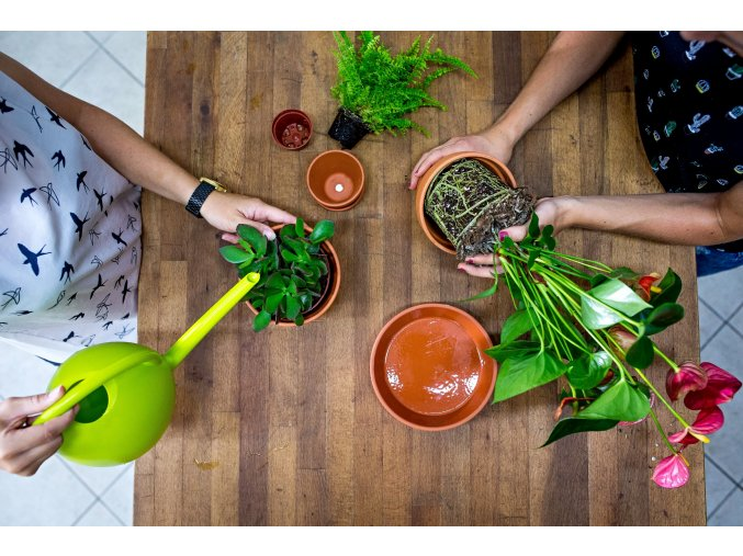 Workshop – Jak na pokojové rostliny
