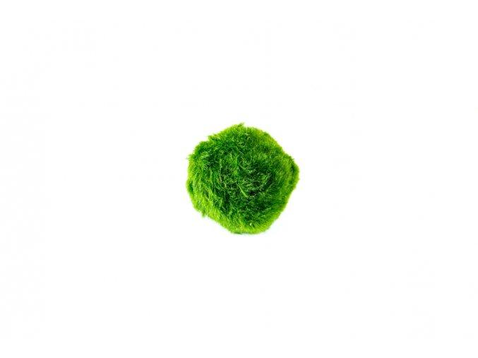 Řasokoule zelená M