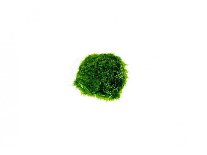 Řasokoule zelená L
