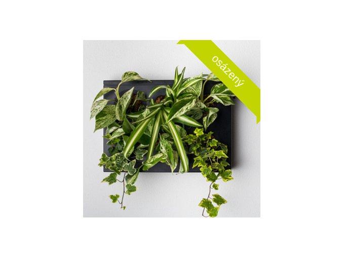 Obraz z živých rostlin HOH!UNO osázený, černá, na světlo