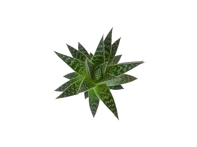 Aloe Tiki Tahi, průměr 8,5cm