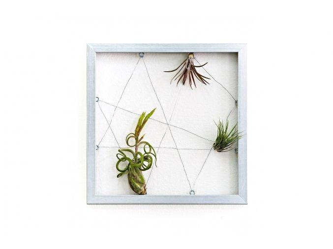 "Obraz z živých rostlin ""Jogín"" 3 tillandsie, 33x33cm, stříbrná"