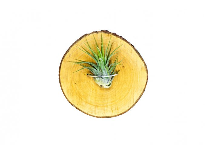 Gardners.cz dreveny stojanek kruh