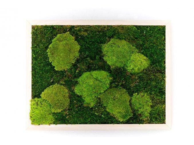 Mechový obraz 30x40 cm z kopečkového mechu v kombinaci s plochým, přírodní