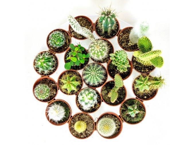 Gardners.cz Kaktus mix 7