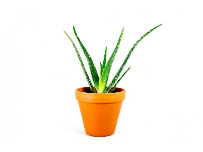 Gardners.cz Aloe vera