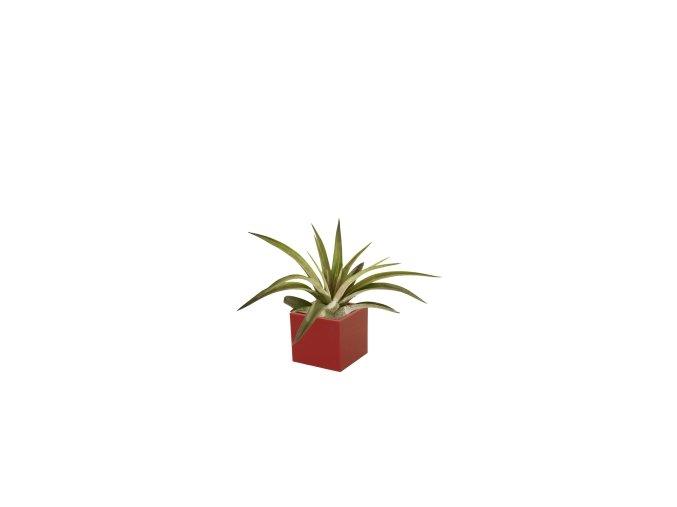 Set magnetického květináče CUBE 3,5cm s Tillandsia Capitata, červená