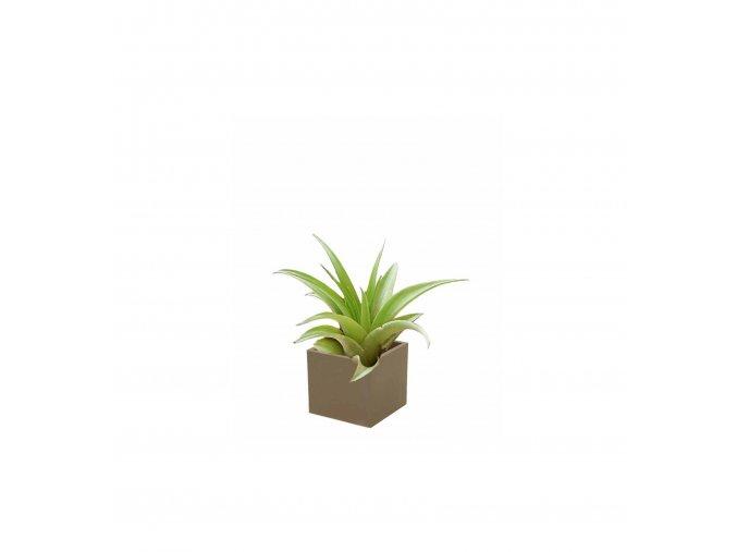 Gardners.cz Set magnetického květináče CUBE 3,5cm s Tillandsia Capitata, hnědá