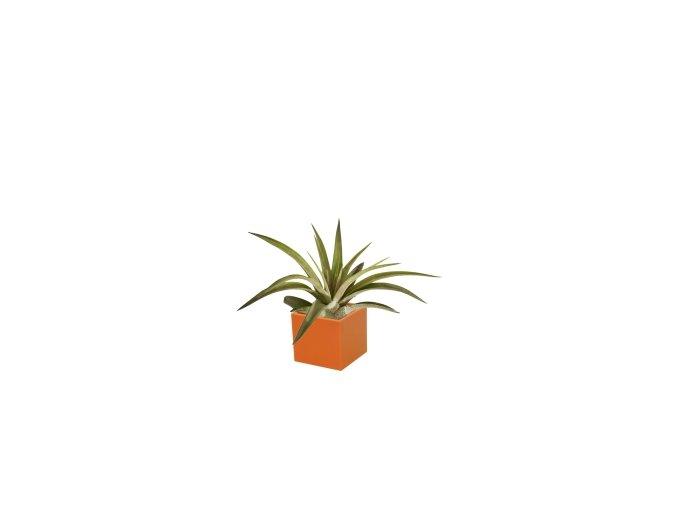 Set magnetického květináče CUBE 3,5cm s Tillandsia Capitata, oranžová