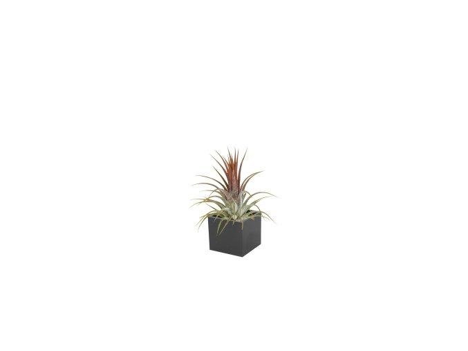 Set magnetického květináče CUBE 3,5cm s Tillandsia Ionantha, černá