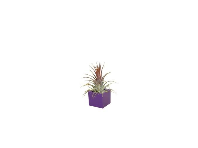 Set magnetického květináče CUBE 3,5cm s Tillandsia Ionantha fialová