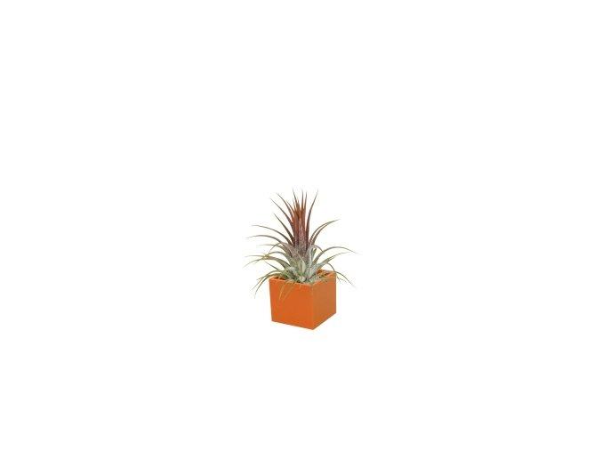 Set magnetického květináče CUBE 3,5cm s Tillandsia Ionantha, oranžová