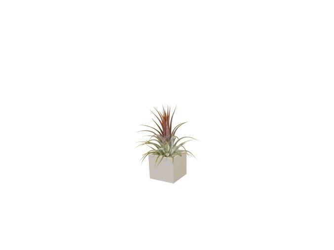 Set magnetického květináče CUBE 3,5cm s Tillandsia Ionantha, světle šedivá