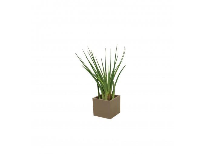Gardners.cz Set magnetického květináče CUBE 3,5cm s Tillandsia Melanocrater, hnědá