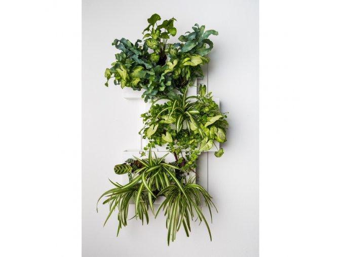 Obraz z živých rostlin HOH! TRIO osázený, bílá