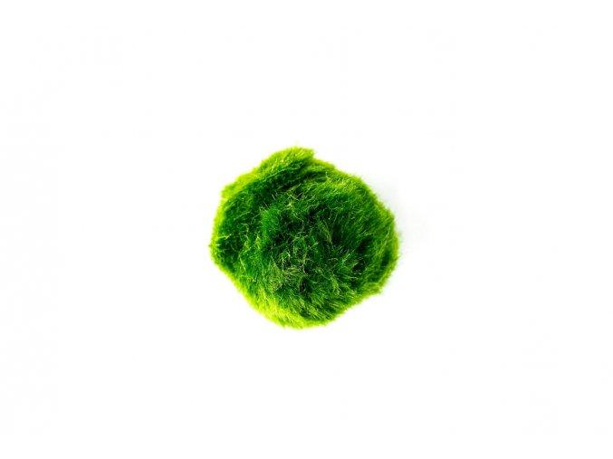 Řasokoule zelená XL