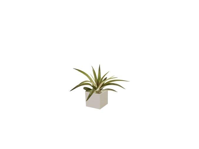 Set magnetického květináče CUBE 3,5cm s Tillandsia Capitata, světle šedivá