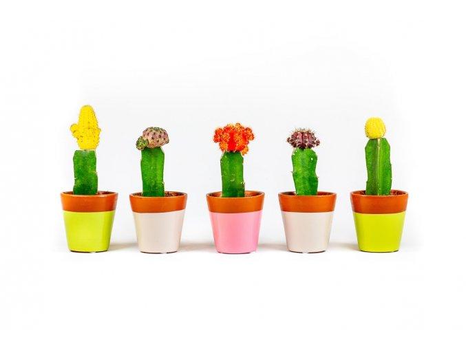Gardners.cz kaktus 01