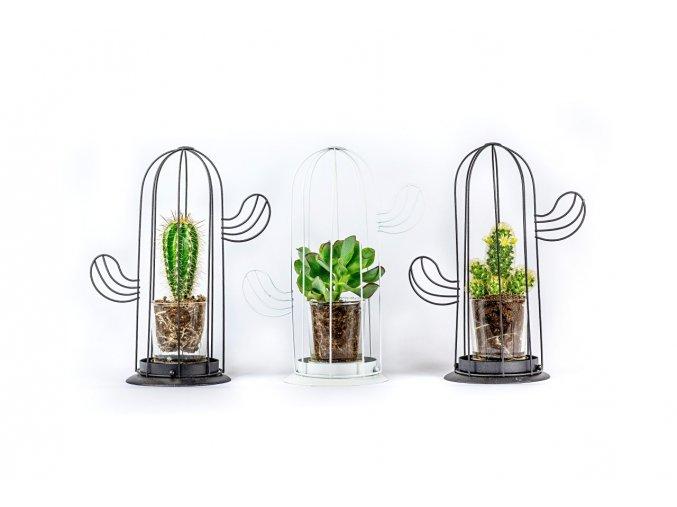 Kaktus v kaktusu (1)