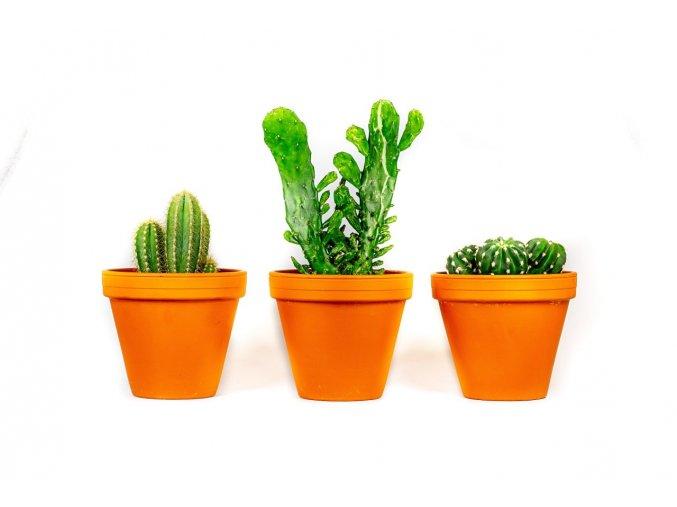 Gardners.cz Kaktus mix