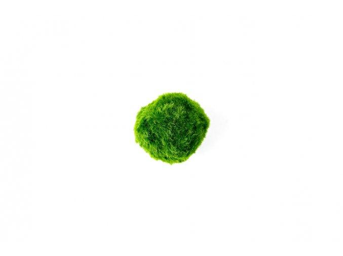 Řasokoule zelená XS