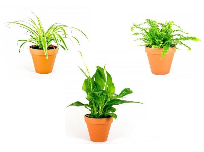 Set rostlin čistících vzduch ve stínu
