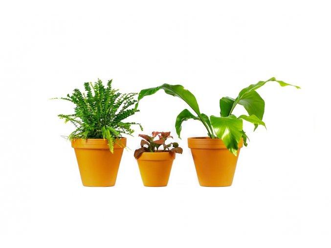 Gardners.cz Set rostlin do terária