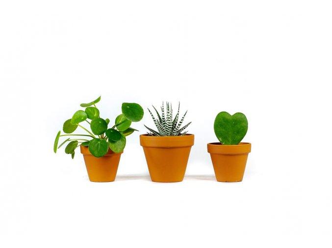 Gardners.cz Set rostlin pro děti