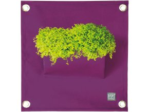 Kapsář na květiny AMMA 50x45 cm, fialová
