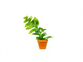 Gardners.cz Epiphyllum, průměr 9 cm