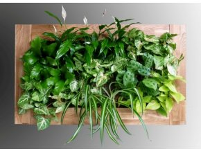 Obraz z živých rostlin na přání