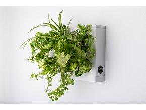 Obraz z živých rostlin HOH!UNO osázený, bílá