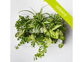 Obraz z živých rostlin HOH! UNO osázený, bílá