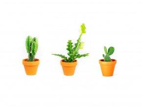 Set rostlin Baby plants kaktusy