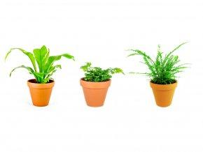 Set rostlin Baby plants kapradiny