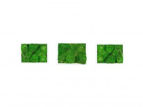 Set 3 mechových obrazů 13x18 z kopečkového mechu, bílá